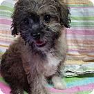 Adopt A Pet :: Camomile