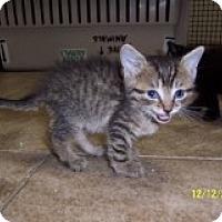 Adopt A Pet :: Sassy - East Brunswick, NJ