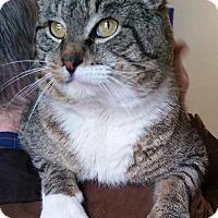 Adopt A Pet :: Wolfie - Windsor, CT
