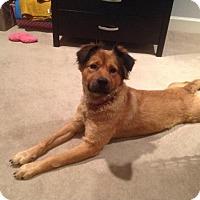 Adopt A Pet :: Puca - Houston, TX