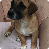 Adopt A Pet :: Carter - Schaumburg, IL