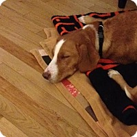 Adopt A Pet :: Lucy - Windermere, FL