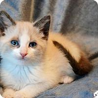 Adopt A Pet :: Topper - Little Rock, AR