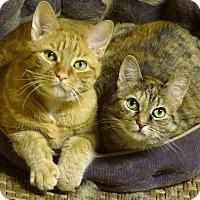 Adopt A Pet :: Freshie & Miles - Courtesy Lis - Sparta, NJ