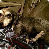 Adopt A Pet :: Nona - Pittsburgh, PA