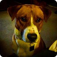 Adopt A Pet :: Deacon - Loudonville, NY