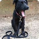 Adopt A Pet :: ISAAC