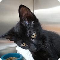 Adopt A Pet :: Laila - Elyria, OH