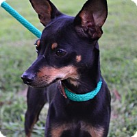 Adopt A Pet :: Nugget, The Kissing Bandit! - Yardley, PA