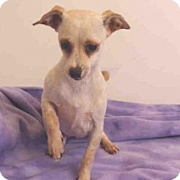 Adopt A Pet :: SUSEA - Oroville, CA