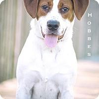 Adopt A Pet :: Hobbes - Webster, TX