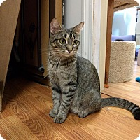 Adopt A Pet :: Mom - Lowell, MA