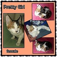 Adopt A Pet :: Pretty Girl - Richmond, CA