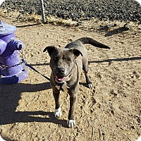 Adopt A Pet :: Alexus - California City, CA