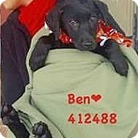 Adopt A Pet :: 412488 Ben - San Antonio, TX