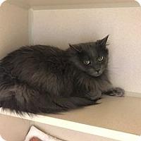 Adopt A Pet :: Ricky - Hudson, NY