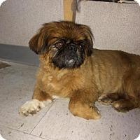 Adopt A Pet :: Theodore - Visalia, CA