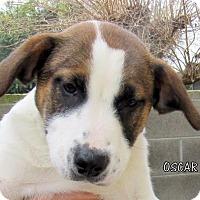 Adopt A Pet :: Oscar (Puppy) - Lindsay, CA