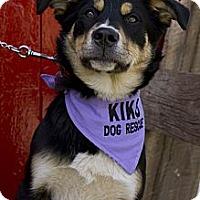 Adopt A Pet :: Emma - Rigaud, QC