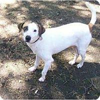 Adopt A Pet :: Milo in Dallas - Houston, TX
