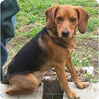 Adopt A Pet :: Bueller  GREAT WITH KIDS! - Antioch, IL