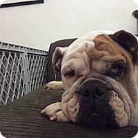 Adopt A Pet :: Antoinette - Cibolo, TX