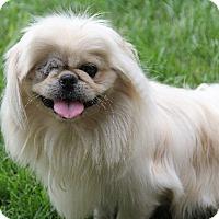 Adopt A Pet :: Camden - Chantilly, VA