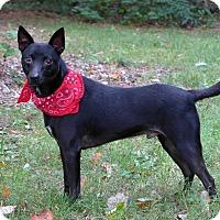 Adopt A Pet :: Recon - Mocksville, NC