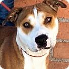 Adopt A Pet :: JEWEL (video)