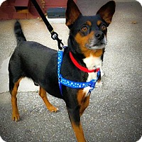 Adopt A Pet :: Rudy - Knoxville, TN