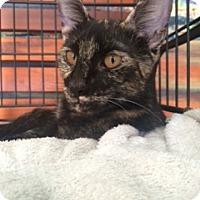 Adopt A Pet :: Precious - Coral Springs, FL