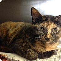 Adopt A Pet :: Tasha - East Brunswick, NJ