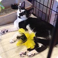 Adopt A Pet :: Picasso - Horsham, PA