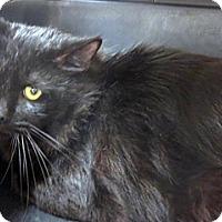 Adopt A Pet :: 285025 - Wildomar, CA
