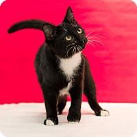 Adopt A Pet :: Leona - Houston, TX
