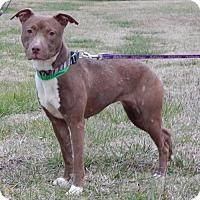 Adopt A Pet :: Molly-012305j - Tupelo, MS