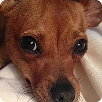 Adopt A Pet :: Dora - Charlotte, MI