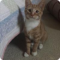 Adopt A Pet :: Rusty - Millersville, MD
