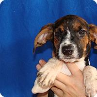 Adopt A Pet :: Morgan - Oviedo, FL