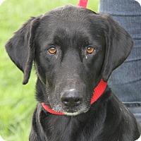 Adopt A Pet :: Cillia & Murphy Brown - Midlothian, VA