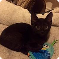 Adopt A Pet :: Boris 2 - Bulverde, TX