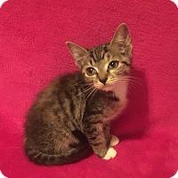 Adopt A Pet :: Lola - Nolensville, TN