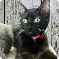"Adopt A Pet :: Foxtrot - he's ""all boy"" - Tucson, AZ"