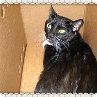 Adopt A Pet :: NICKS - Marietta, GA
