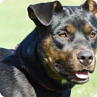 Adopt A Pet :: Carli - Freeport, IL
