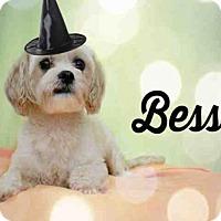 Adopt A Pet :: *BESS - Sugar Land, TX