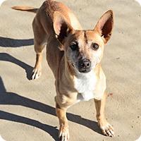 Adopt A Pet :: Hemmingway - Gardnerville, NV