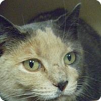 Adopt A Pet :: Callie Jo - Hamburg, NY