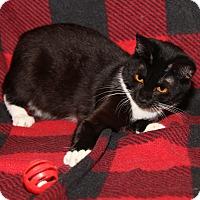 Adopt A Pet :: Calamity Jane - Marietta, OH