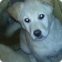 Adopt A Pet :: Izzie - Chicago, IL